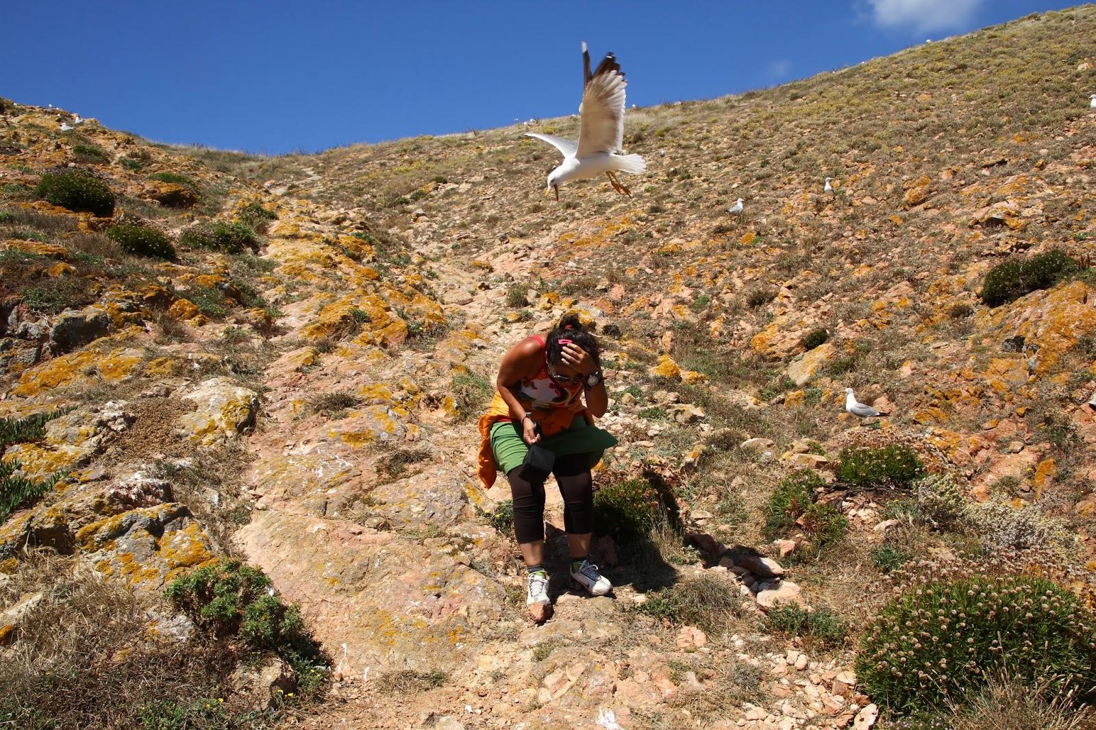 Berlengas, um paraíso selvagem... e aqui tão perto! | Portugal