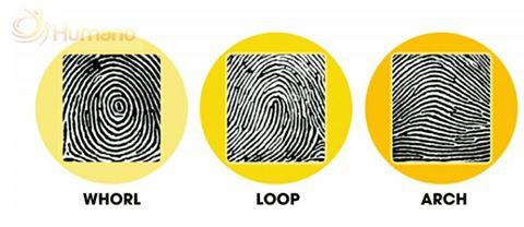 Dấu vân tay được chia làm 3 loại: Whorl, Loop, Arch. Những người sở hữu ba loại vân tay này đều có nét tính cách khác nhau.