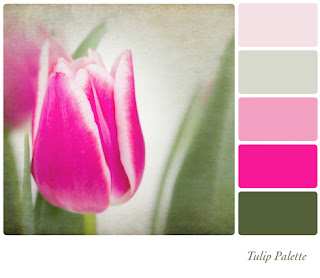 Photo of a Tulip With a Colour Palette At the Side
