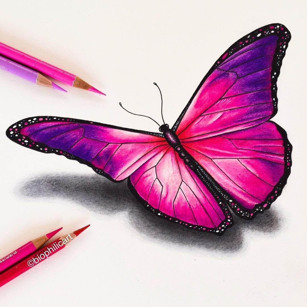 05-Pink-Butterfly-Sallyann-Brightly-Colored-Animal-Pencil-Drawings-www-designstack-co
