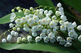 Цветы Элеоноры - ландыши