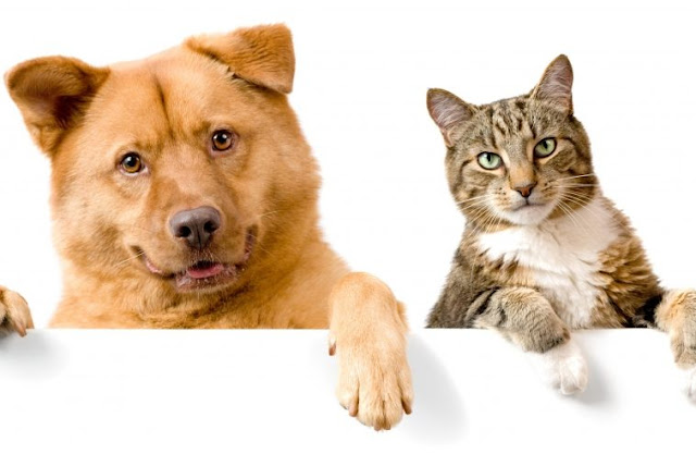 Home Remedies For Ear Mites In Dogs and Cats