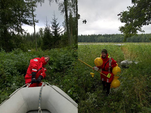 Kaksi kuvaa - toisessa kiskotaan kumivenettä tiheän kasvillisuuden läpi, toisessa kannetaan rannalle poijuja ja muuta tutkimusvälineistöä