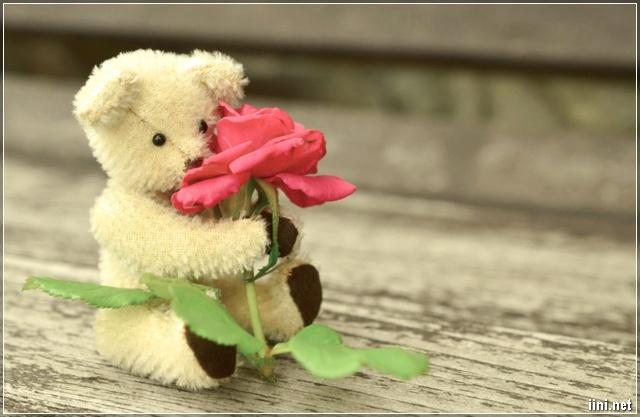 ảnh gấu teddy và hoa hồng siêu cute