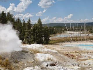 vegetacion con geysers