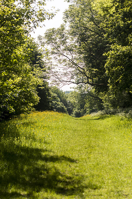 Golden Green Ride at Howe Park Wood