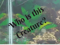 Mysterious Creature in Video Riddle