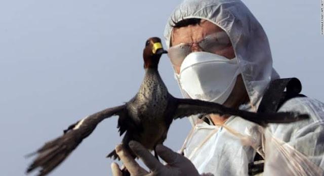RIYADH'S AZIZIA BIRD MARKET CLOSED AFTER BIRD FLU DETECTED