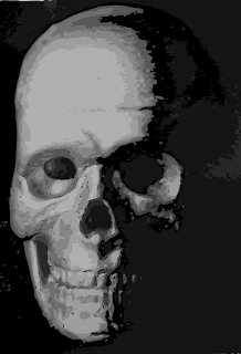 Illustration of human skull; source:freestockphotos.biz