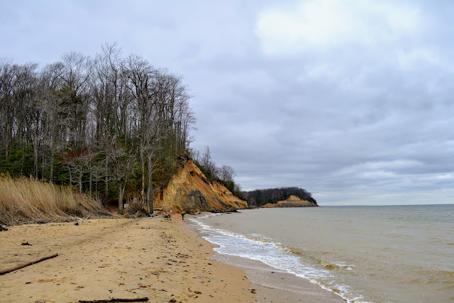 Парк Калверт Кліфс, Меріленд (Calvert Cliffs State Park, MD)