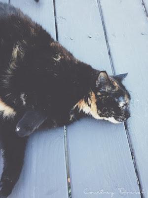 Courtney Tomesch Katana Cat