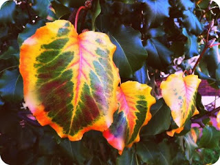 Changing Leaves Photo Series and Happy Fall!