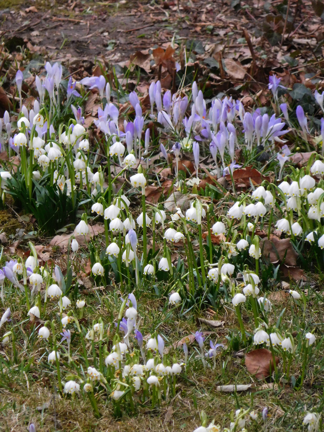 Vrenis Vienna Daily Photo First Spring Flowers
