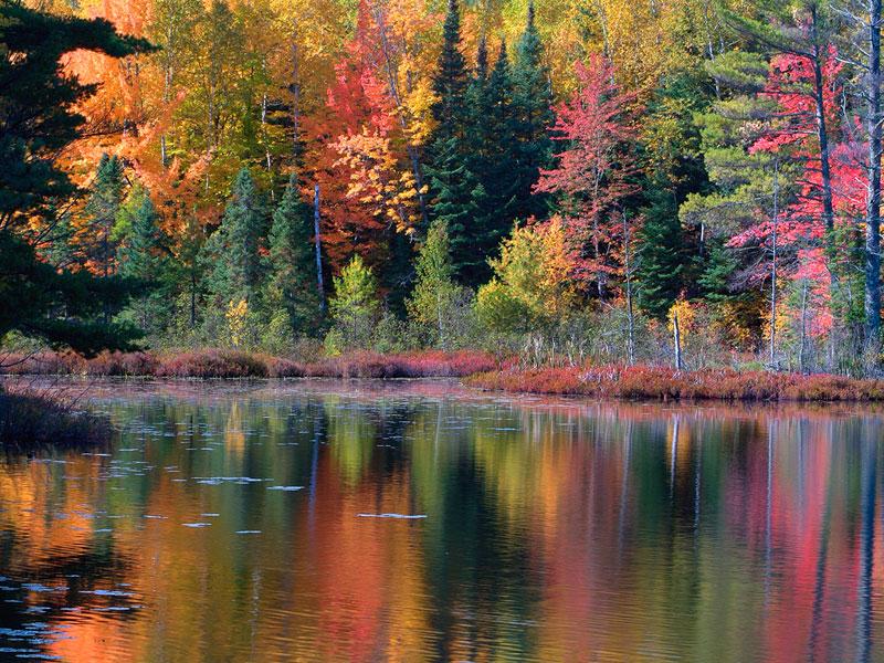 Colorful Nature Scenes: Die Cuttin Divas: Challenge # 30: Fall Colors