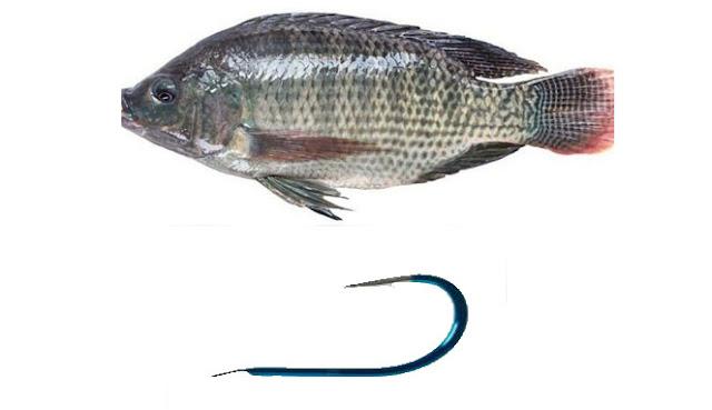 Lebih baik Sedekah Ikan atau sedekah Kail?