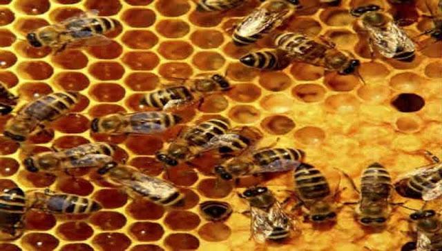 Οι άνθρωποι είχαν βρει τρόπο να αξιοποιούν τις μέλισσες από τη Λίθινη εποχή