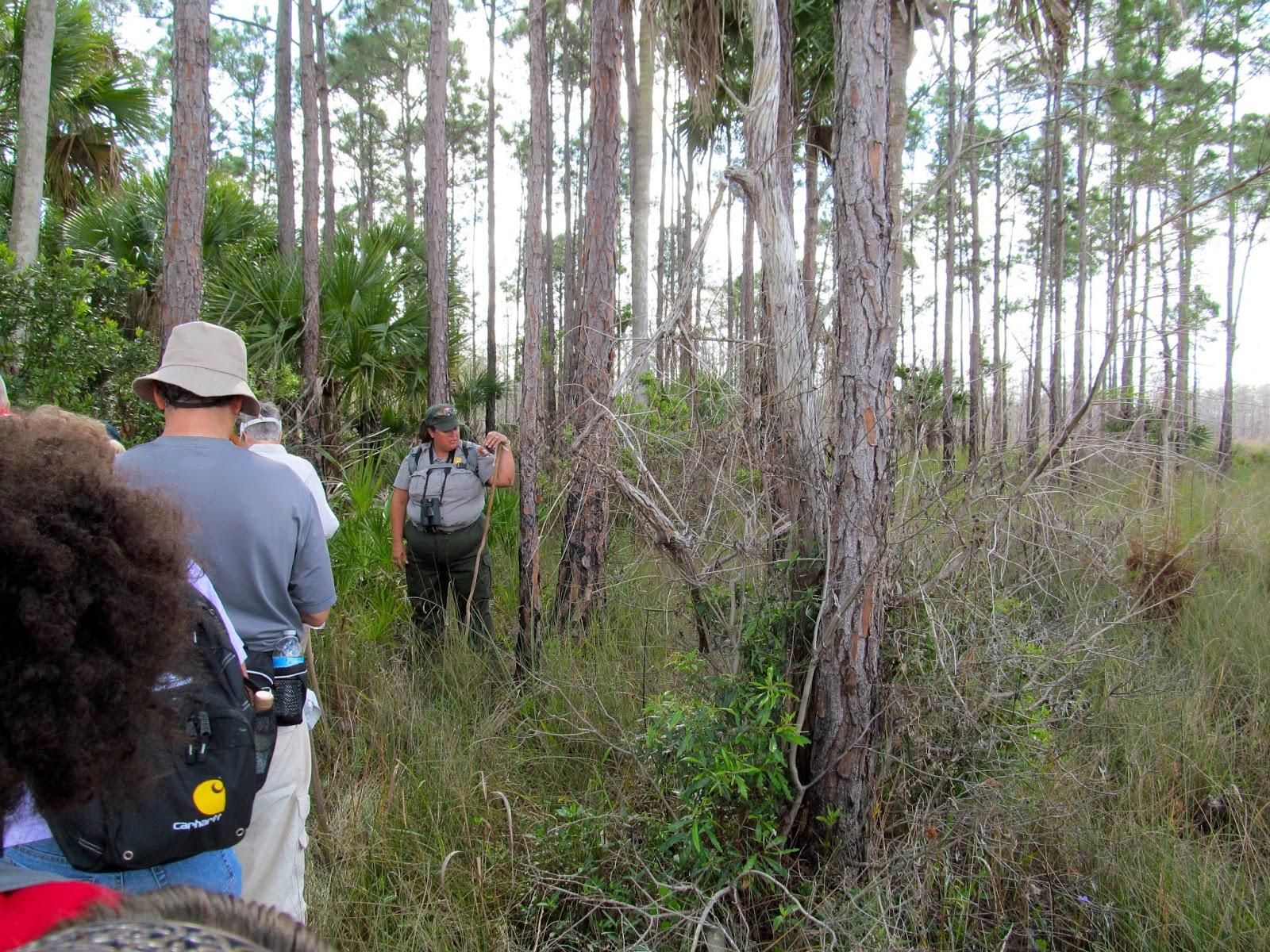 Cypress Sawyer Historic HIke - Big Cypress Swamp - Florida Everglades - Hiking