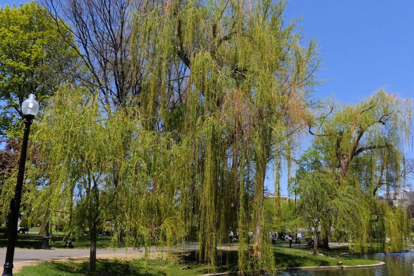 Boston Photos Boston Public Garden