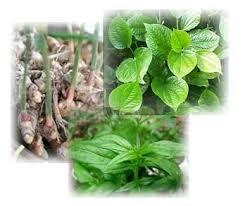 Image Tanaman Herbal Mengobati Kutil Kelamin