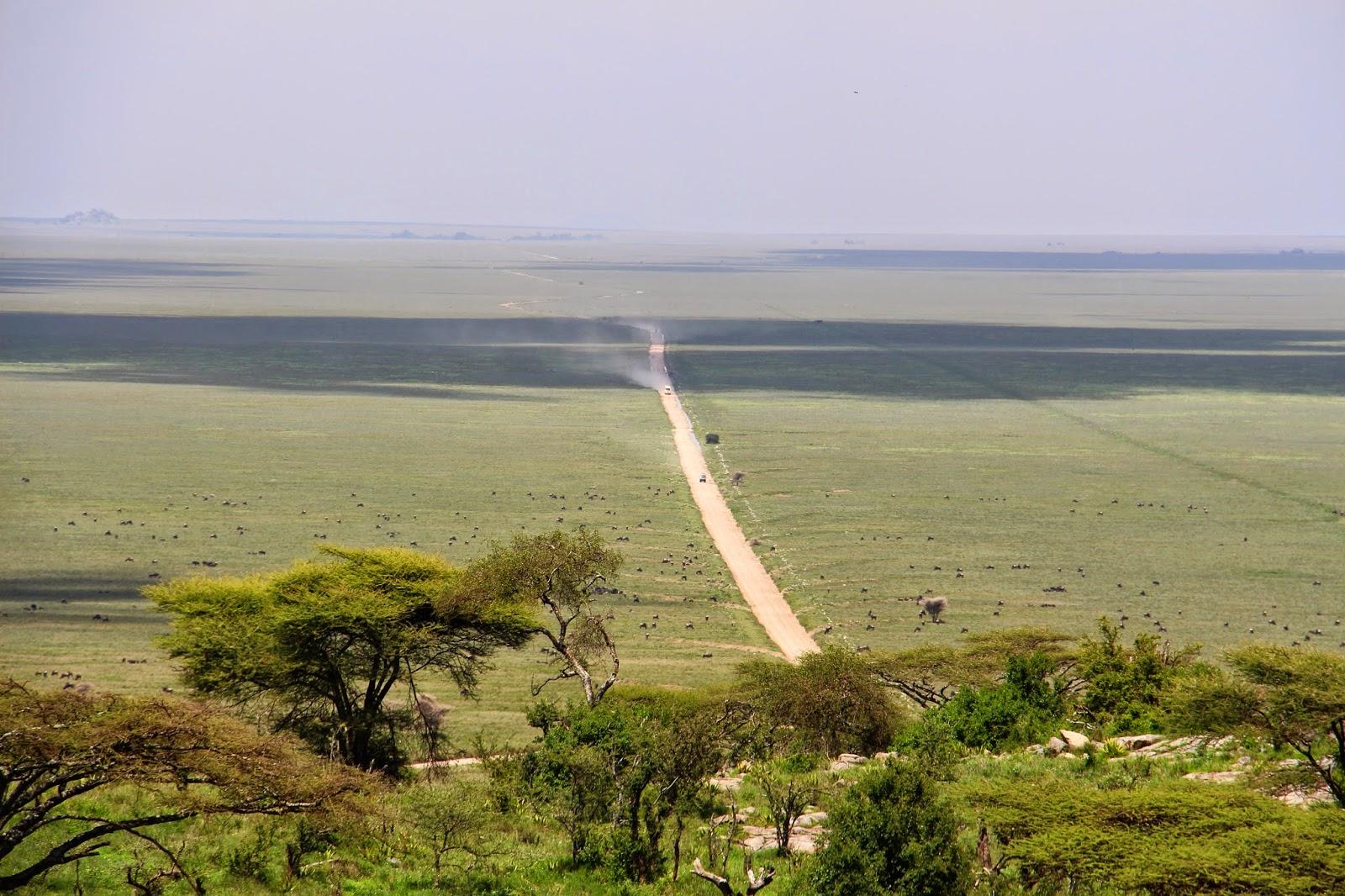 Um safari para ver a grande MIGRAÇÃO DOS GNUS no Serengeti | Tanzânia