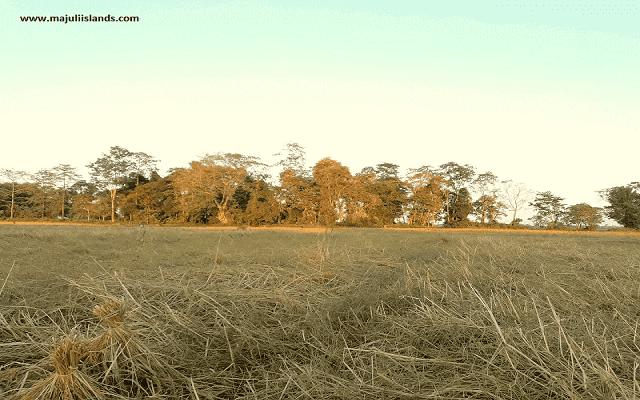 Economy Of The Majuli Island,  Agro-Based Economy Of Majuli