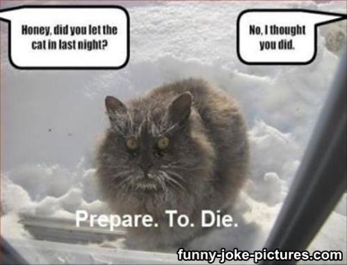 cat left outside