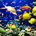 В ОАЭ будет создан крупнейший сад коралловых рифов