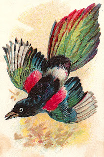 bird artwork trade card antique illustration digital download