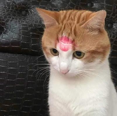 Kucing Dapat Ciuman