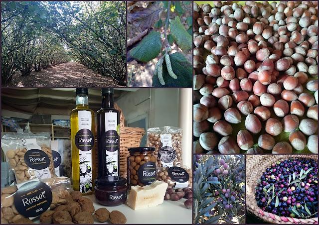Un dia entre avellaners i oliveres a Ca Rosset