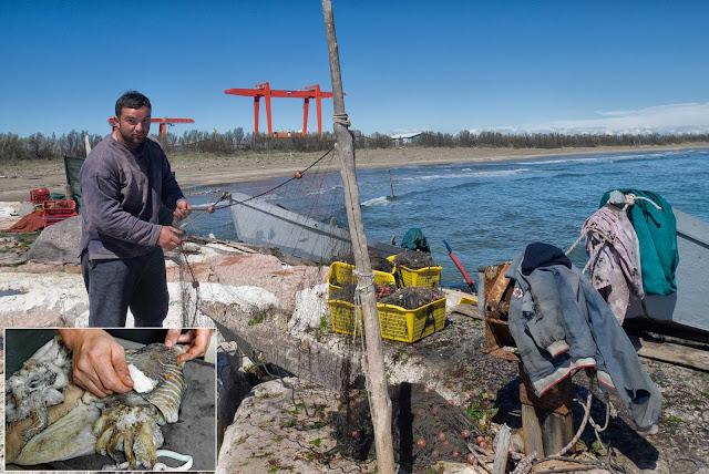 pesca della seppia
