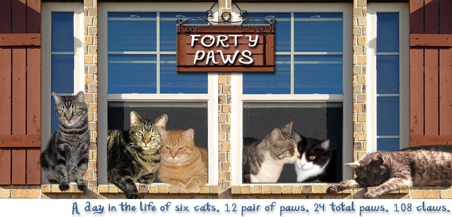 Forty Paws