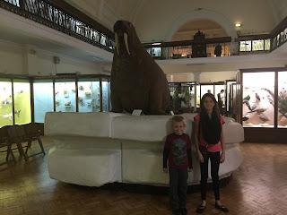 Horniman Museum walrus