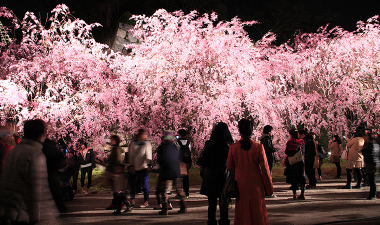 Japan Wow : ชวนเที่ยว Fukuoka Castle Sakura Festival 2016