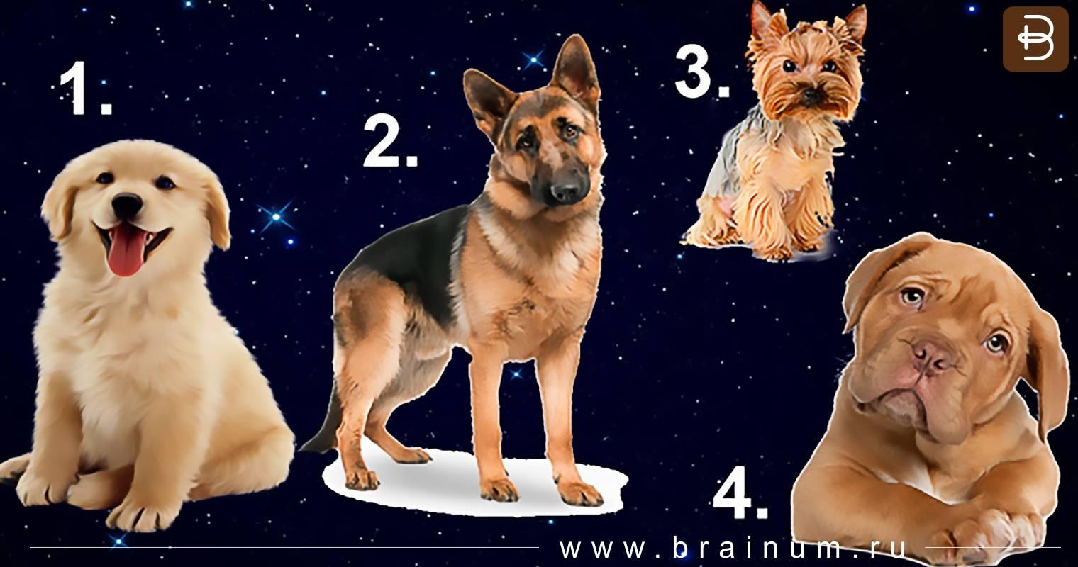 Тест — иллюзия оптического обмана Найди собаку новые фото