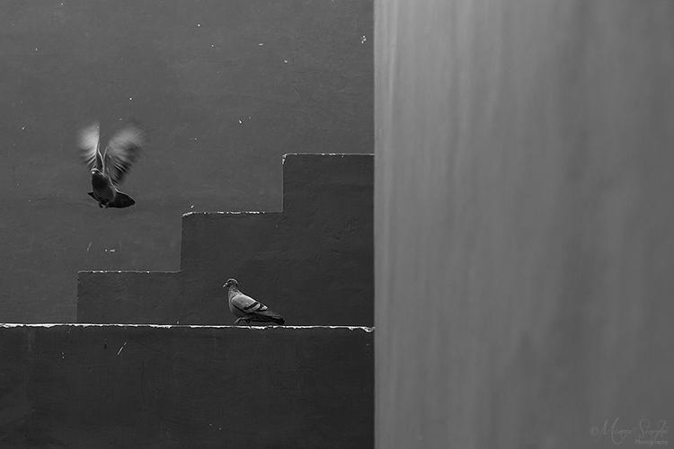 Pigeon at Jawahar Kala Kendra