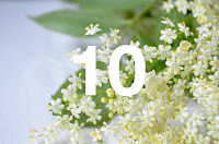 http://www.otchipotchi.com/2018/04/elderflowers.html
