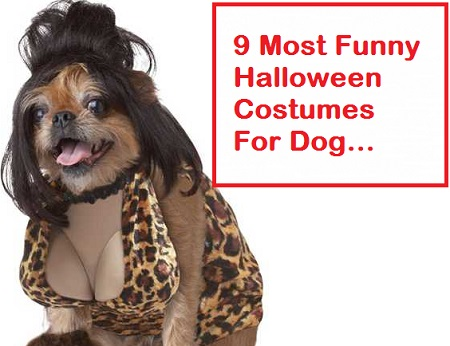 Adult dog halloween costumes