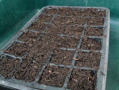 Seed tray Using a dibber Green Fingered Blog