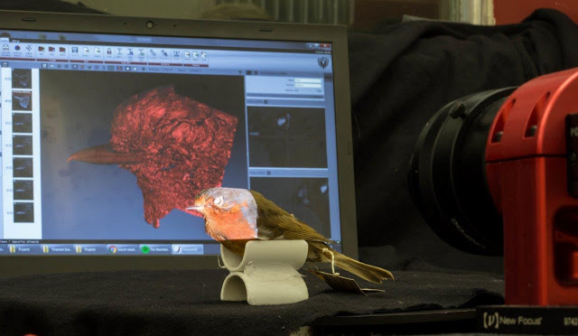 Bird lovers help scientists discover secrets of beak evolution