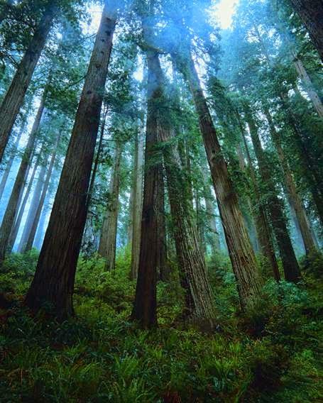 http://www.silvikultur.com/klasifikasi_pohon_hutan.html