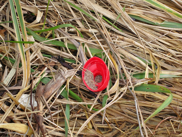 Red bottle top lying on dead and dying winter grass and bits of reed.