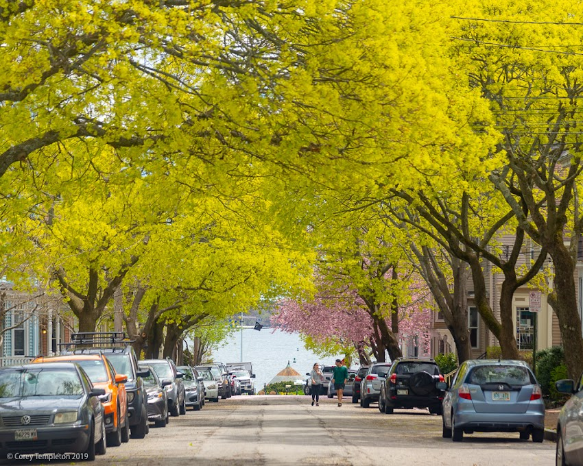 Portland, Maine USA May 2019 photo by Corey Templeton. Spring colors on Morning Street, looking towards Fort Allen Park.
