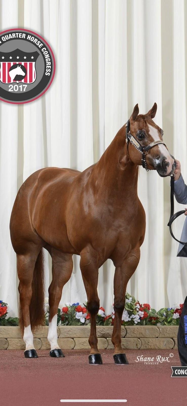 Cavalos | Horses