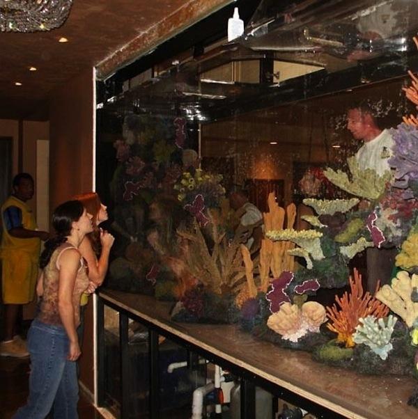 Celebrities Amazing Fish Tank