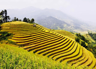 Come to Hoang Su Phi to Watch Majestic Terraced Fields