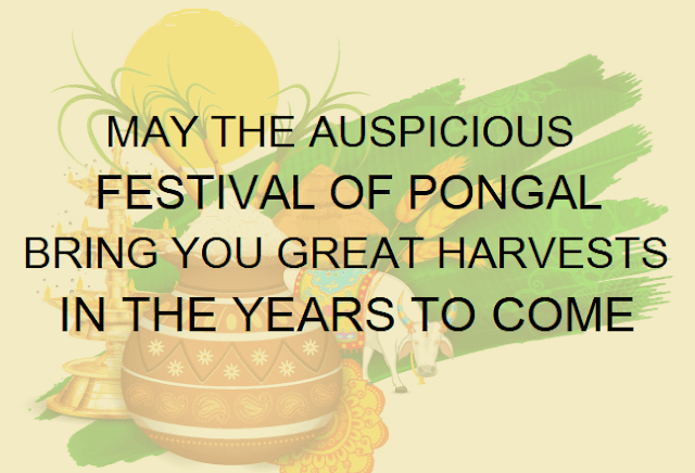 Pongal Festival Greetings in English