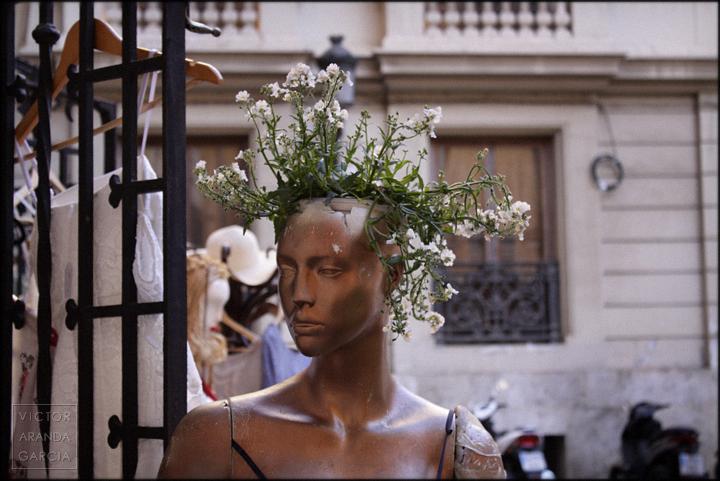 fotografia,valencia,maniqui,naturaleza,flores,planta,cabeza