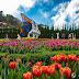 Rực rỡ sắc hoa Tulip trên đỉnh Bà Nà Hill