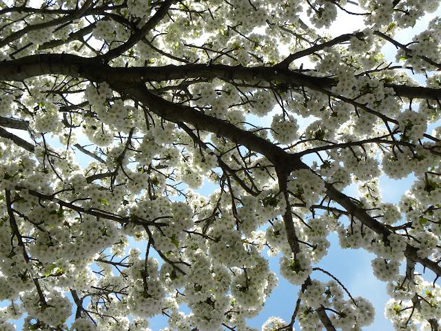 Afbeeldingsresultaat voor blij dat ik brei bloesem lente